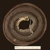 http://mczbase.mcz.harvard.edu/specimen_images/herpetology/large/R77228_A_parvifrons_stygius_H_v.jpg
