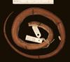 http://mczbase.mcz.harvard.edu/specimen_images/herpetology/large/R81020_A_polylepis_H_d.jpg