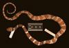 http://mczbase.mcz.harvard.edu/specimen_images/herpetology/large/R83209_D_sanctjoannis_S_d.jpg