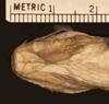 http://mczbase.mcz.harvard.edu/specimen_images/herpetology/large/R902_C_rhodorachis_rhodorachis_H_hv.jpg