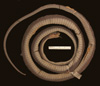 http://mczbase.mcz.harvard.edu/specimen_images/herpetology/large/R9260_D_elongata_H_v.jpg