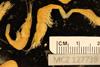 http://mczbase.mcz.harvard.edu/specimen_images/invertebrates/large/127739_Palaemonidae_3.jpg