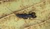 http://mczbase.mcz.harvard.edu/specimen_images/invertebrates/large/129084_Thelyphonellus_amazonicus_13.jpg