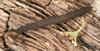 http://mczbase.mcz.harvard.edu/specimen_images/invertebrates/large/131433_Kumbadjena_8.jpg