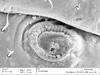 http://mczbase.mcz.harvard.edu/specimen_images/invertebrates/large/132273_Brasiliogovea_microphaga_54.jpg