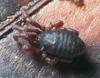 http://mczbase.mcz.harvard.edu/specimen_images/invertebrates/large/132276_Huitaca_boyacaensis_3.jpg