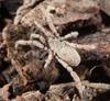 http://mczbase.mcz.harvard.edu/specimen_images/invertebrates/large/132406_Anelasmocephalus_cambridgei_3.jpg