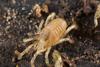 http://mczbase.mcz.harvard.edu/specimen_images/invertebrates/large/133238_Rakaia_stewartiensis_1.jpg