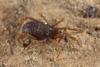 http://mczbase.mcz.harvard.edu/specimen_images/invertebrates/large/133238_Rakaia_stewartiensis_13.jpg