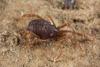 http://mczbase.mcz.harvard.edu/specimen_images/invertebrates/large/133238_Rakaia_stewartiensis_14.jpg