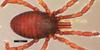 http://mczbase.mcz.harvard.edu/specimen_images/invertebrates/large/133769_Huitaca_bitaco_1.jpg