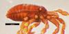http://mczbase.mcz.harvard.edu/specimen_images/invertebrates/large/133770_Huitaca_caldas_30.jpg