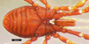 http://mczbase.mcz.harvard.edu/specimen_images/invertebrates/large/133770_Huitaca_caldas_31.jpg