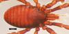 http://mczbase.mcz.harvard.edu/specimen_images/invertebrates/large/133770_Huitaca_caldas_32.jpg