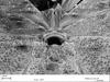 http://mczbase.mcz.harvard.edu/specimen_images/invertebrates/large/133772_Huitaca_sharkeyi_46.jpg