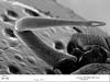 http://mczbase.mcz.harvard.edu/specimen_images/invertebrates/large/133772_Huitaca_sharkeyi_5.jpg