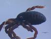 http://mczbase.mcz.harvard.edu/specimen_images/invertebrates/large/133922_Neogovea_matawai_2.jpg