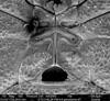 http://mczbase.mcz.harvard.edu/specimen_images/invertebrates/large/134638_Aoraki_healyi_16.jpg