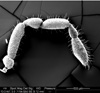 http://mczbase.mcz.harvard.edu/specimen_images/invertebrates/large/134641_Aoraki_interma_7.jpg