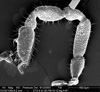http://mczbase.mcz.harvard.edu/specimen_images/invertebrates/large/134646_Aoraki_denticulata_10.jpg