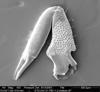 http://mczbase.mcz.harvard.edu/specimen_images/invertebrates/large/134647_Aoraki_denticulata_2.jpg