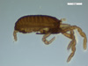 http://mczbase.mcz.harvard.edu/specimen_images/invertebrates/large/134942_Leggogovia_2.jpg