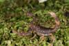 http://mczbase.mcz.harvard.edu/specimen_images/invertebrates/large/136515_Scorpiones_2.jpg