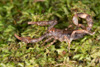 http://mczbase.mcz.harvard.edu/specimen_images/invertebrates/large/136515_Scorpiones_3.jpg
