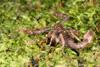 http://mczbase.mcz.harvard.edu/specimen_images/invertebrates/large/136515_Scorpiones_4.jpg