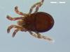 http://mczbase.mcz.harvard.edu/specimen_images/invertebrates/large/136516_Microgovia_oviformis_3.jpg