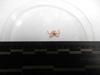 http://mczbase.mcz.harvard.edu/specimen_images/invertebrates/large/137763_Ophiuroidea_2.jpg