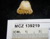 http://mczbase.mcz.harvard.edu/specimen_images/invertebrates/large/139219_Scleractinia_2.jpg