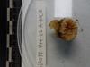 http://mczbase.mcz.harvard.edu/specimen_images/invertebrates/large/139219_Scleractinia_3.jpg