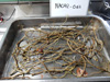 http://mczbase.mcz.harvard.edu/specimen_images/invertebrates/large/139231_Polychaeta_1.jpg