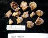 http://mczbase.mcz.harvard.edu/specimen_images/invertebrates/large/139234_Actiniaria_1.jpg