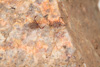 http://mczbase.mcz.harvard.edu/specimen_images/invertebrates/large/139242_Pseudogarypus_bicornis_15.jpg