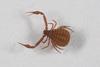 http://mczbase.mcz.harvard.edu/specimen_images/invertebrates/large/139242_Pseudogarypus_bicornis_3.jpg