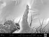 http://mczbase.mcz.harvard.edu/specimen_images/invertebrates/large/140062_Neogovea_matawai_34.jpg