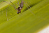 http://mczbase.mcz.harvard.edu/specimen_images/invertebrates/large/141219_Tekelloides_4.jpg