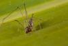 http://mczbase.mcz.harvard.edu/specimen_images/invertebrates/large/141219_Tekelloides_8.jpg