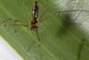 http://mczbase.mcz.harvard.edu/specimen_images/invertebrates/large/141250_Meringa_1.jpg