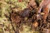 http://mczbase.mcz.harvard.edu/specimen_images/invertebrates/large/143900_Neogoveidae_1.jpg