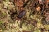 http://mczbase.mcz.harvard.edu/specimen_images/invertebrates/large/143900_Neogoveidae_2.jpg