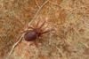 http://mczbase.mcz.harvard.edu/specimen_images/invertebrates/large/143901_Neogoveidae_10.jpg