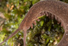 http://mczbase.mcz.harvard.edu/specimen_images/invertebrates/large/143924_Epiperipatus_trinidadensis_11.jpg