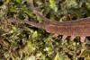http://mczbase.mcz.harvard.edu/specimen_images/invertebrates/large/143924_Epiperipatus_trinidadensis_9.jpg