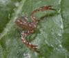 http://mczbase.mcz.harvard.edu/specimen_images/invertebrates/large/143944_Bochica_withi_14.jpg