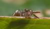 http://mczbase.mcz.harvard.edu/specimen_images/invertebrates/large/143944_Bochica_withi_6.jpg