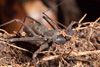 http://mczbase.mcz.harvard.edu/specimen_images/invertebrates/large/143945_Amblypygi_1.jpg