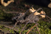 http://mczbase.mcz.harvard.edu/specimen_images/invertebrates/large/143945_Amblypygi_14.jpg